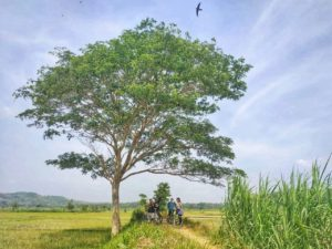 Kasongan Village Cycling Tour